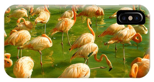 Red Florida Flamingos In Green Water IPhone Case