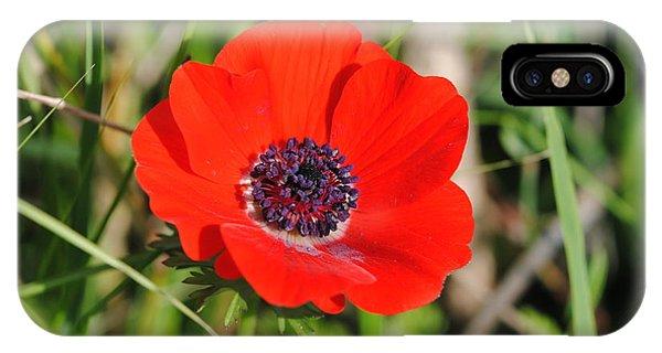 Red Anemone Coronaria 4 IPhone Case