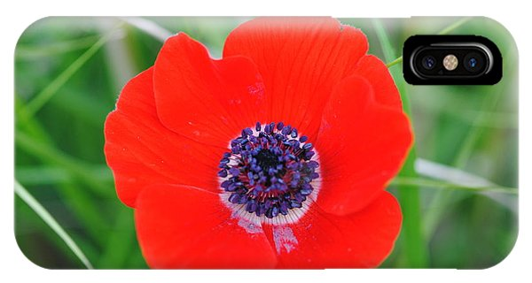 Red Anemone Coronaria 3 IPhone Case