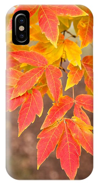 New England Fall Foliage iPhone Case - Red Foliage On Farmland In Vermont by American School