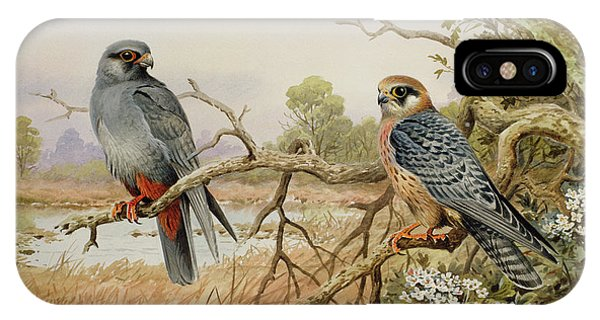 Red Tail Hawk iPhone Case - Red-footed Falcons by Carl Donner