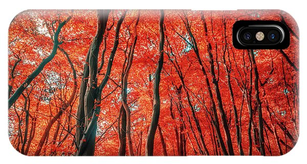 Red Forest Of Sunlight IPhone Case