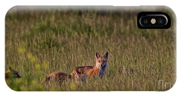 Red Fox Family IPhone Case