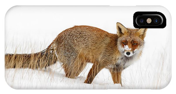 Red Fox In A Snow Covered Scene IPhone Case