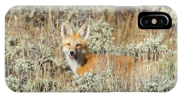 Red Fox In Sage Brush IPhone Case