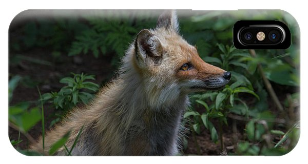 Red Fox In The Forest IPhone Case