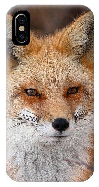 Red Fox In Winter Ruff Phone Case by Max Allen