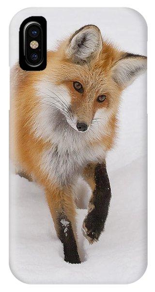 Red Fox Portrait IPhone Case