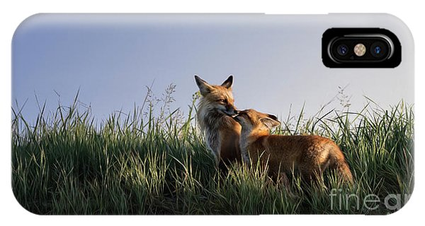 Red Fox Morning IPhone Case