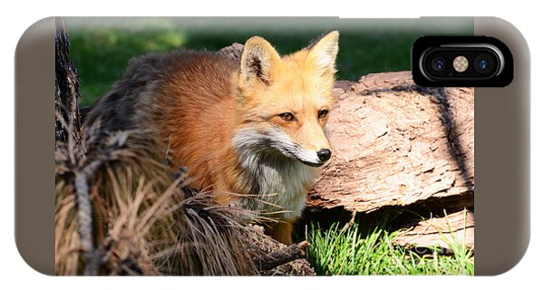 Red Fox On Patrol IPhone Case