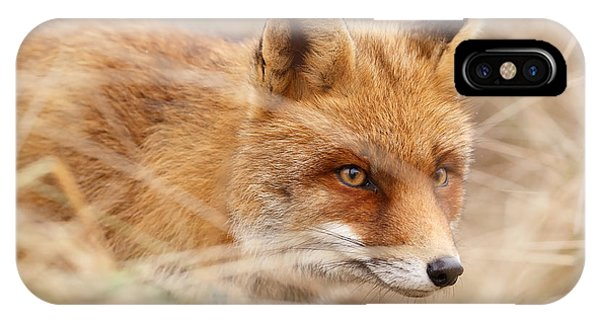 Fox iPhone Case - Red Fox On The Hunt by Roeselien Raimond