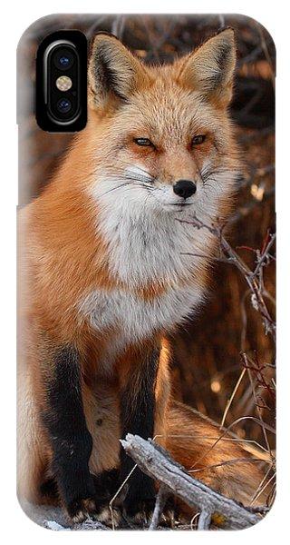 Red Fox Pausing Atop Log IPhone Case