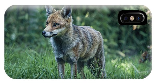 Red Fox Phone Case by Philip Pound