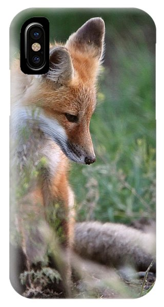 Red Fox Pup Outside Its Den IPhone Case