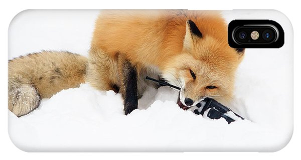 Red Fox To Base IPhone Case