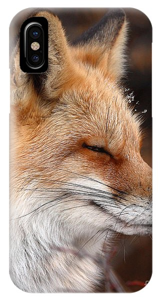 Red Fox With Ice Formed On Brow IPhone Case