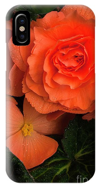 Red Giant Begonia Ruffle Form IPhone Case