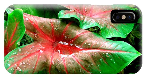 IPhone Case featuring the painting Red Green Caladium Floral Still Life Morning Rain by Mas Art Studio