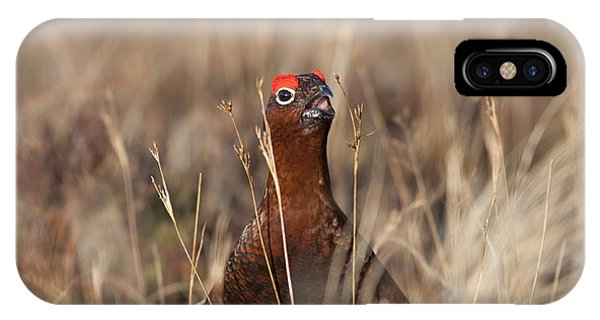 Red Grouse Calling IPhone Case
