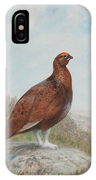 Mallard iPhone Case - Red Grouse by Charles Stanley Todd