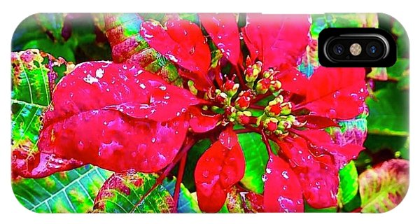 Red Hawaiian Poinsettia IPhone Case