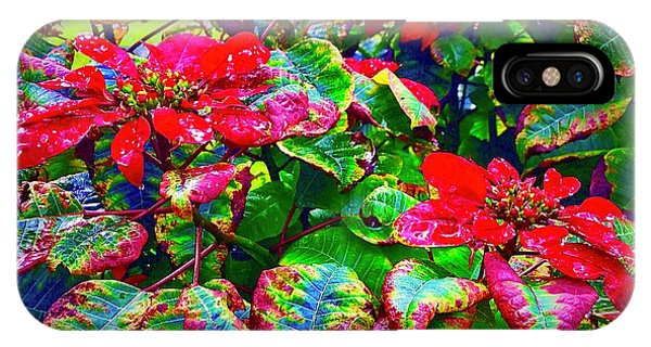 Red Hawaiian Poinsettias In Puna IPhone Case