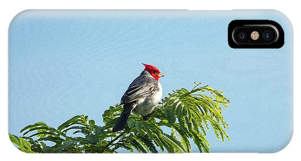 Red-headed Cardinal On A Branch IPhone Case