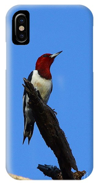 Red Headed Woodpecker On A Snag IPhone Case