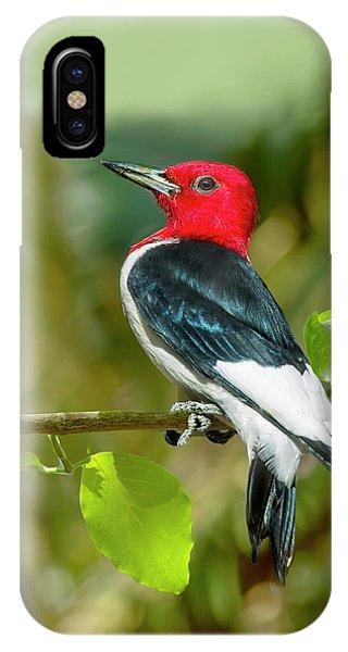 Red-headed Woodpecker Portrait IPhone Case