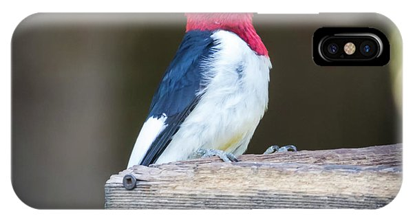 IPhone Case featuring the photograph Red-headed Woodpecker With Seed  by Ricky L Jones