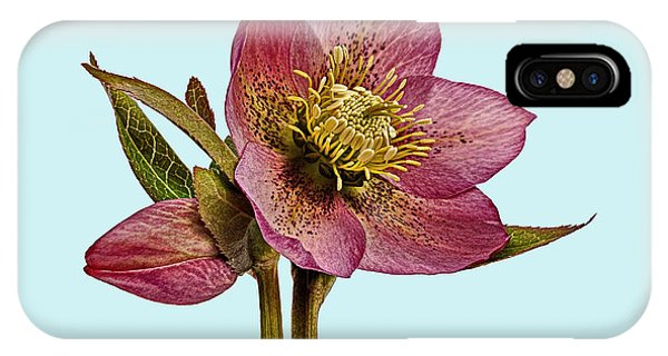 IPhone Case featuring the photograph Red Hellebore Blue Background by Paul Gulliver