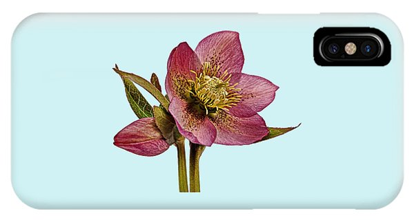 Red Hellebore Blue Background IPhone Case