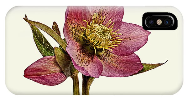 IPhone Case featuring the photograph Red Hellebore Cream Background by Paul Gulliver