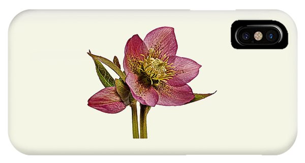 Red Hellebore Cream Background IPhone Case