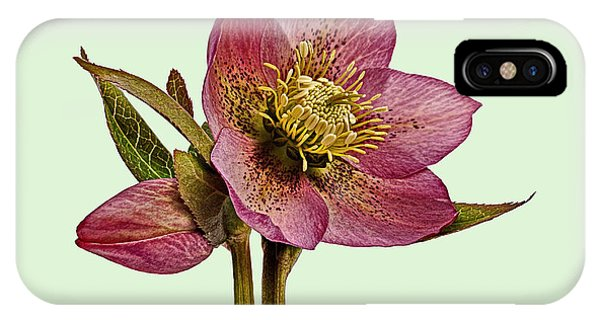 IPhone Case featuring the photograph Red Hellebore Green Background by Paul Gulliver