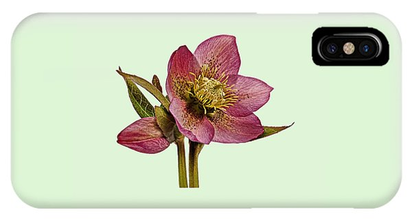 Red Hellebore Green Background IPhone Case