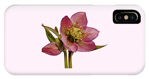 Red Hellebore Transparent Background IPhone Case