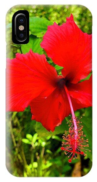 Red Hibiscus In Puna IPhone Case