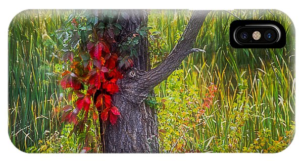 Red Leaves And Vines On Tree In Forest Of Reeds IPhone Case