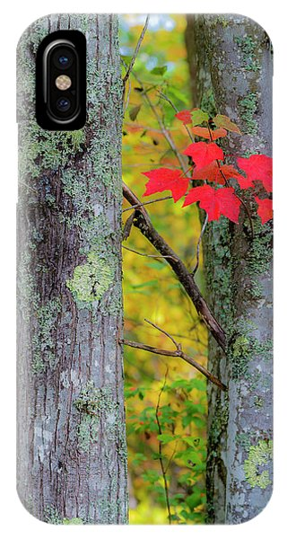 IPhone Case featuring the photograph Red Leaves by Gary Lengyel