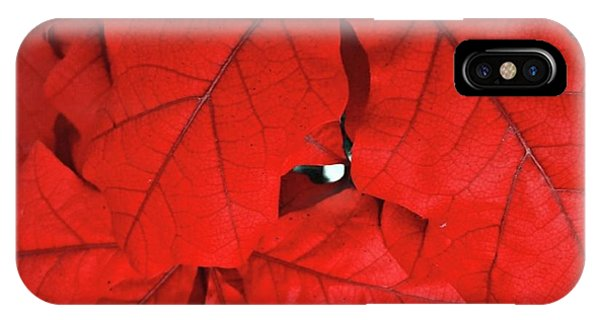 Red Leaves  Phone Case by Rachel Hannah