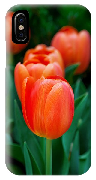 Fall Flowers iPhone Case - Red Tulips by Az Jackson