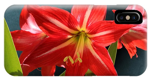 Red Lily Flower Trio IPhone Case