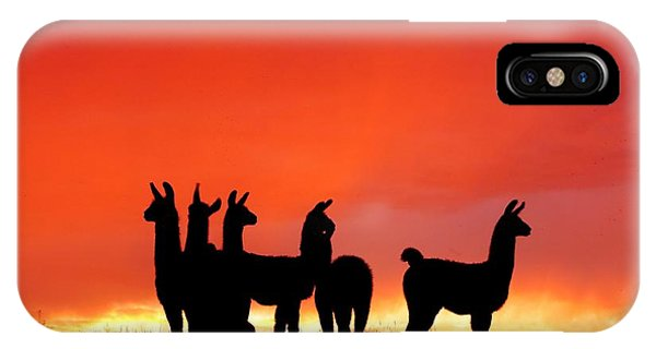 Red Llama Sunset 1 IPhone Case
