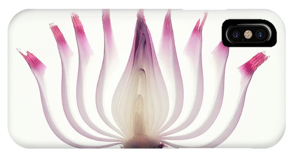 Layer iPhone Case - Red Onion Translucent Peeled Layers by Johan Swanepoel