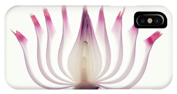 Red Onion Translucent Peeled Layers IPhone Case