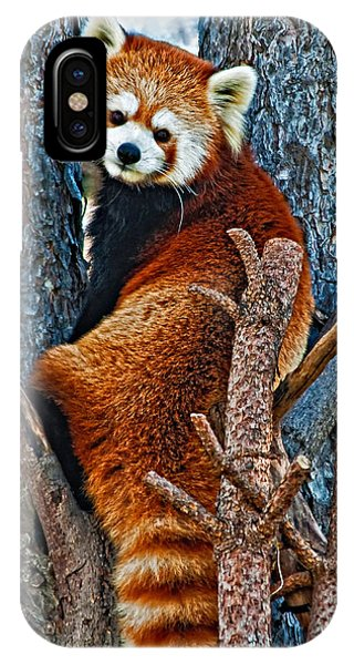 Steve Harrington iPhone Case - Red Panda by Steve Harrington