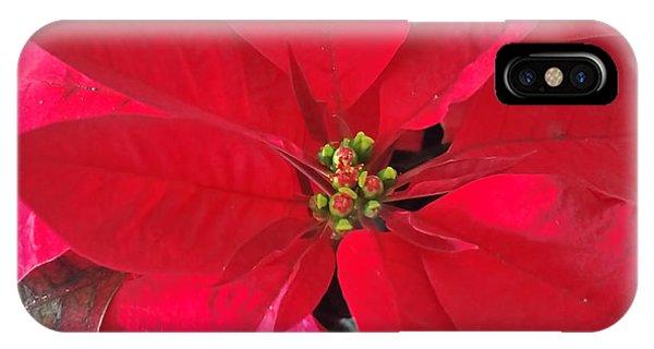 Red Poinsettia IPhone Case
