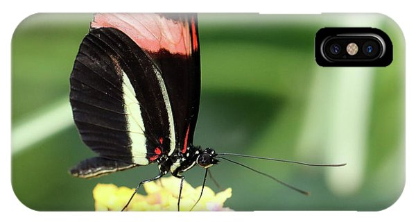 Red Postman Butterfly Heliconius Erato Cyrbia IPhone Case