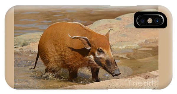 Red River Hog  IPhone Case